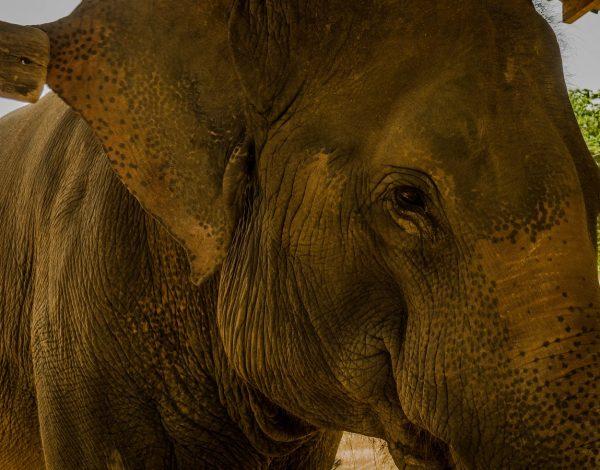 Baan Wassanna : Un lieu sûr pour nos amis les éléphants