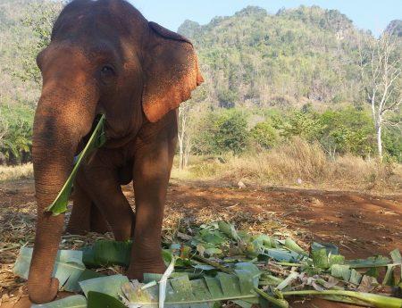 Ganesha Park : Eco-volontariat chez les éléphants