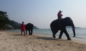Vivre au rythme de l'éléphant à Koh Chang