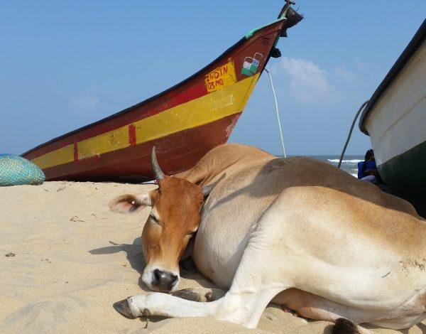 Mahabalipuram, le calme après la tempête