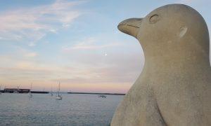 Oamaru : Le repaire des manchots de Nouvelle-Zélande