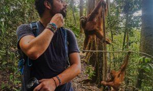Orang-outans : Rencontre avec des fans à Sumatra, en Indonésie