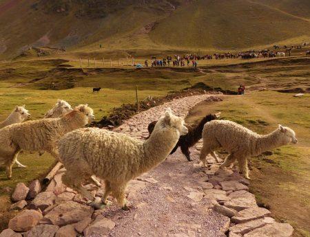 Bilan : 3 semaines au Pérou