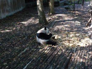 pandas-bouddha-25