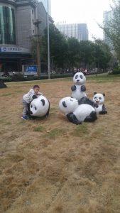 pandas-bouddha-9